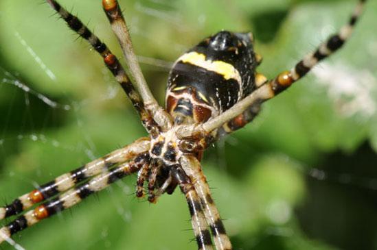 Les Fruits De Mer » Spiders