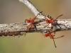 Baby Hemipterans