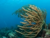 Diving Coral Gardens: Great Dog Island, BVI