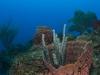 Diving Ladder Labyrinth in Saba
