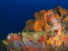 Sponges and Coral on Mt. Michel