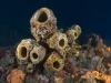 Sponges on Mt. Michel