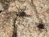 Unidentified Arachnid