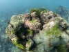 Corals, Algae and Zoanthids