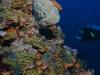 Outer Limits Pinnacle Saba