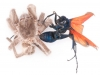 Tarantula Hawk Wasp (<em>Pepsis rubra</em>) and Tarantula in Deadly Embrace