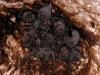 Bats in Terres Basses Cave
