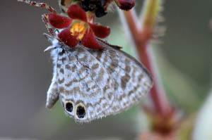 cassius-blue