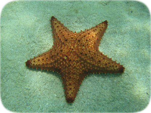 cushionseastar1