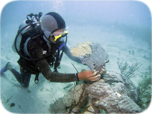 jp-fixing-artificial-reef
