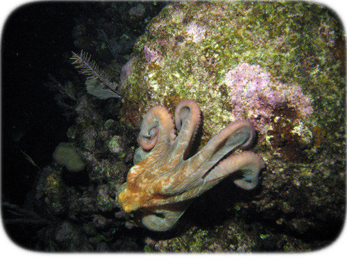 octopus-on-the-run