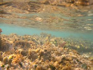 shallow3